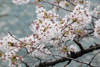 20190401_6892   by Junko Minami