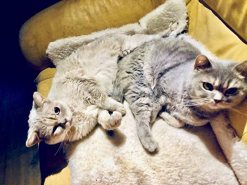 cuddly cats, april 2019 ❤️