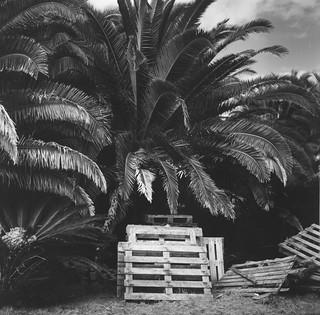 Lagoa Azores Acores Rolleiflex 3.5 Tessar Kodak 400 tri x