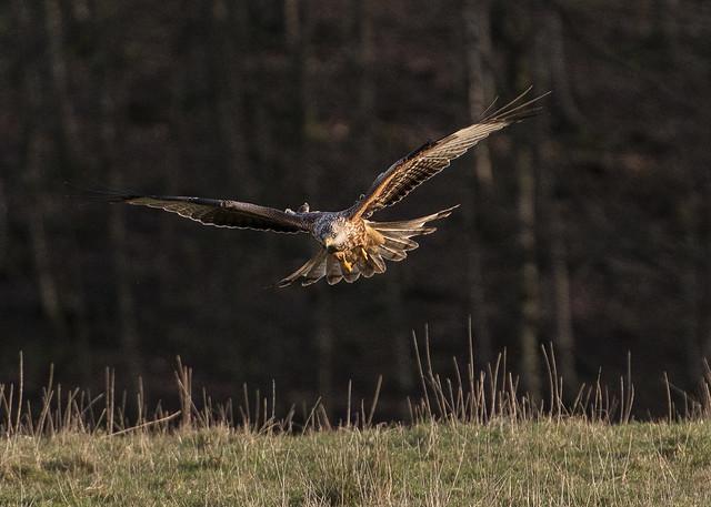 Kite flying.