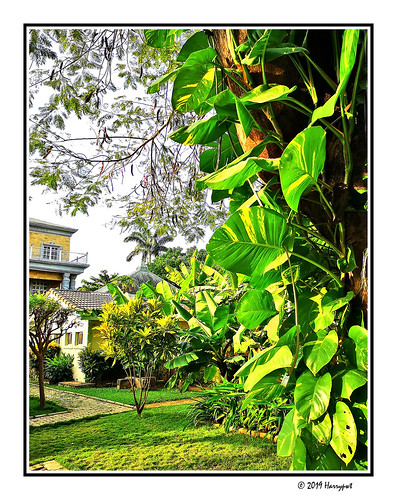 harrypwt huaweip20 p20 smartphone borders framed garden backyard maitama abuja nigeria africa afrika green plants leaves grass paintinglike