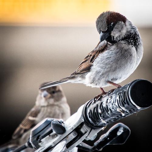 Birds on State Street   by kenfagerdotcom