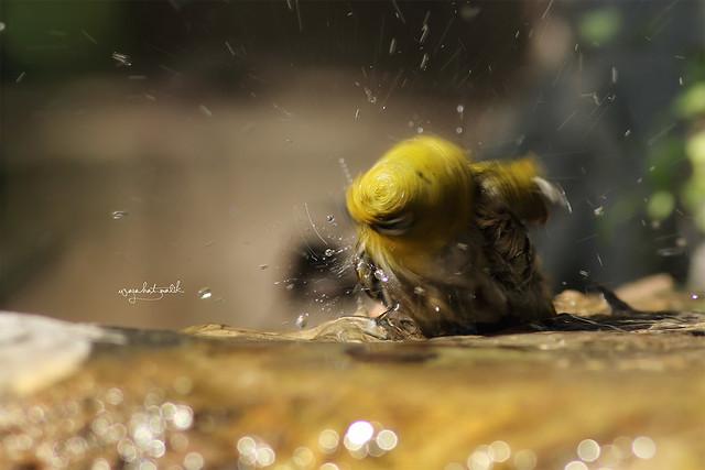 splash in the air !!