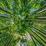 報国寺。 鎌倉市。空は緑です。