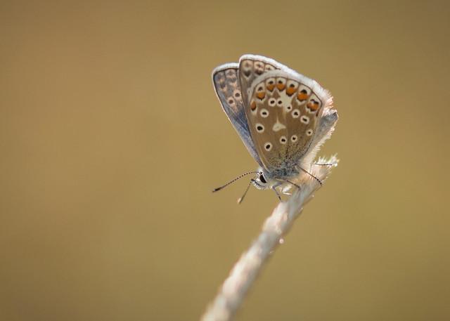 friday flutter