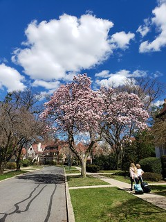 Walking Home From School On A Beautiful Spring Day | by Joe Shlabotnik
