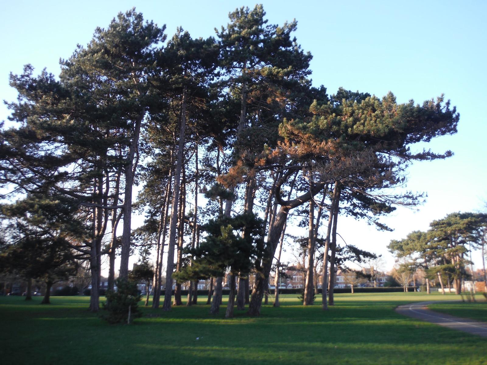 Cator Park, New Beckenham SWC Short Walk 36 - Waterlink Way (Lower Sydenham to Greenwich) [Arena Start]
