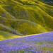 Purple field by FollowingNature (Yao Liu)