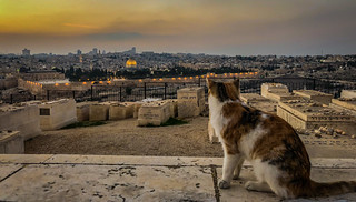 Cat watching the sunset over the Old City viewed from Mount of Olives - Jerusalem Israel | by mbell1975