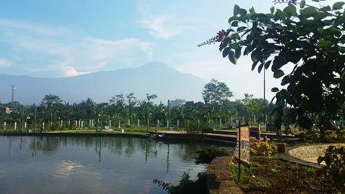 setiawanap setiawanapvlog indonesia tanaman tumbuhan daun bunga buah batang plants tree leaf flower fruit pemandangan alam panorama view landscape
