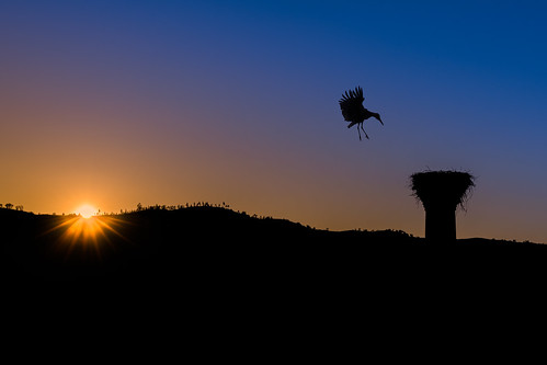 Returning Home At Sunset | by www.craigrogers.photography