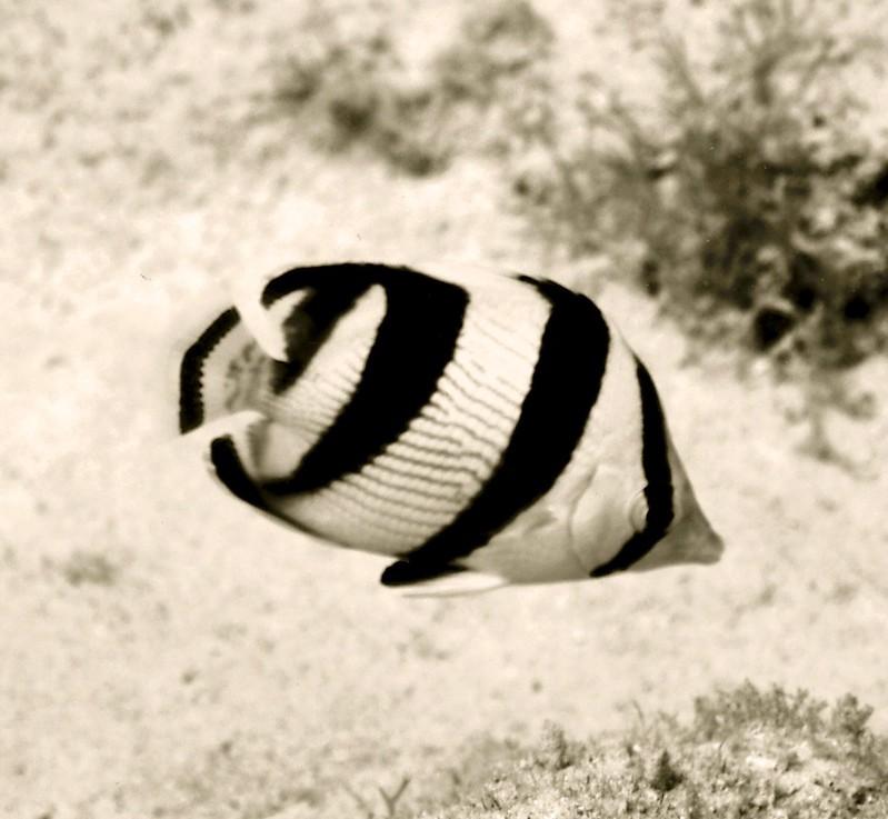 Aruba scuba shots videos 349