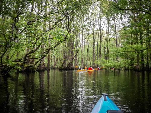 Edisto River Trip with Bamberg Chamber of Commerce | by RandomConnections