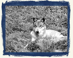 And_Out_Come_The_Wolfes-14-12-39 AM-