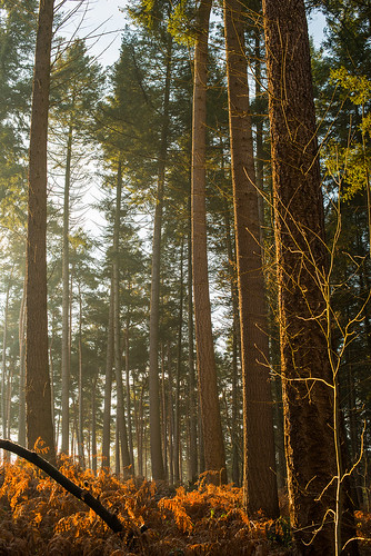 nikond800e 50mmf14g nikkor50mm14gafsd sunrise trees forest shrubs nohdr belgium flanders halle outdoor haze plants nature naturereserve winter