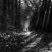 In the woods by marikoen