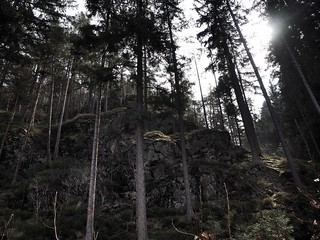 bohemian forrest | by paddy_bb