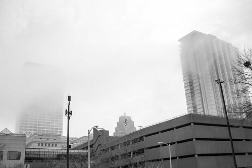 Fog 'n Bird