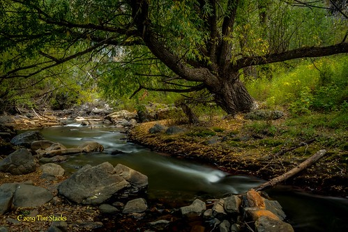 bearcreek colorado fall lairofthebearpark landscape leaves outdoors rock stream usa waterway willowtrees