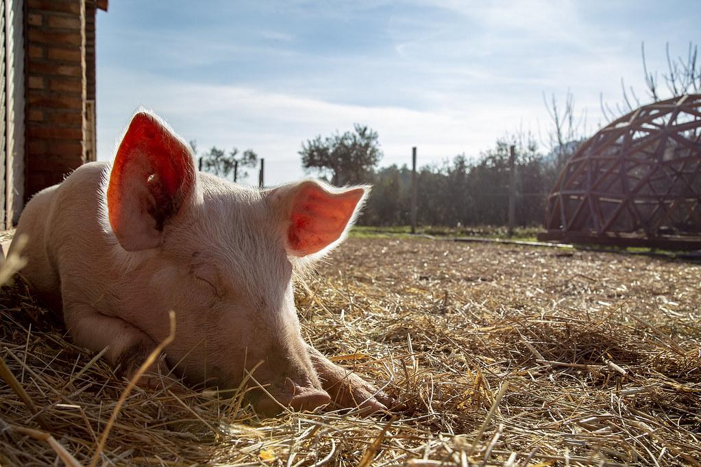 IMG_7400 | El Hogar Animal Sanctuary Foto: Lucia Albano | Fundación El  Hogar | Flickr