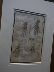 Leonardo da Vinci - A life in drawing - Birmingham Museum & Art Gallery - The bones, muscles and tendons of the hand c. 1510-11