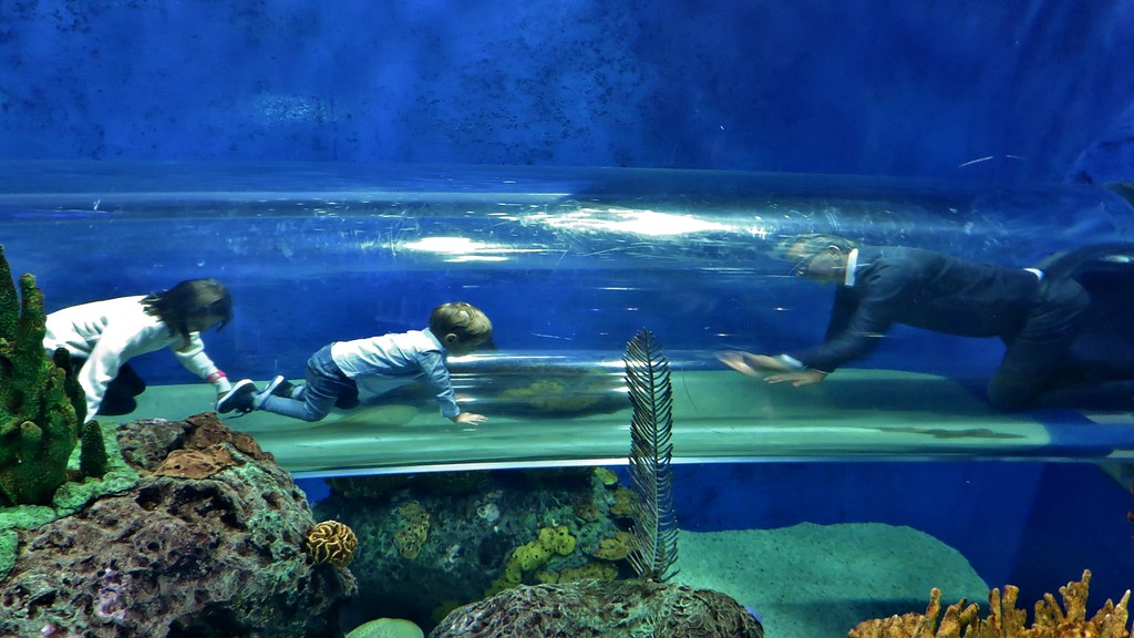Image result for people through aquarium glass