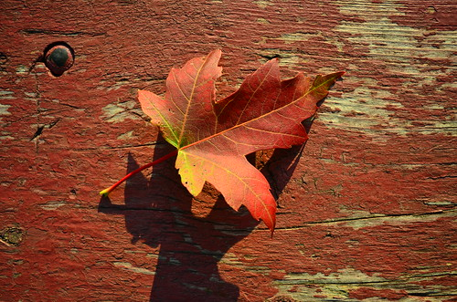 the colour of autumn | by Painting with Delight