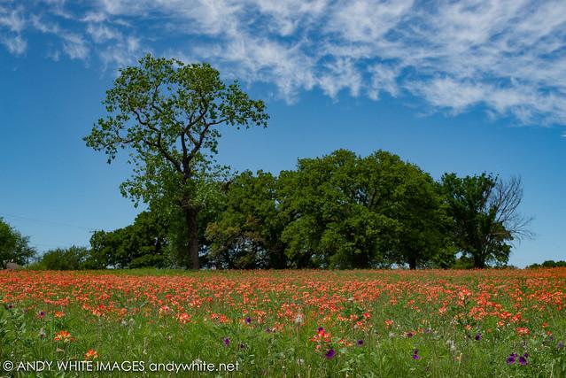 wildflowers20190411-3