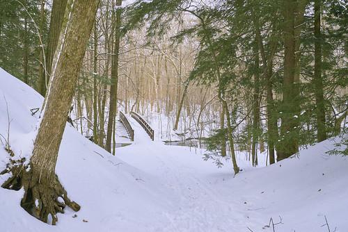 woods winter bridge creek