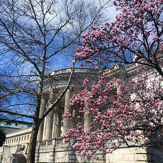 It's definitely spring here in DC. | by Aaron Akins