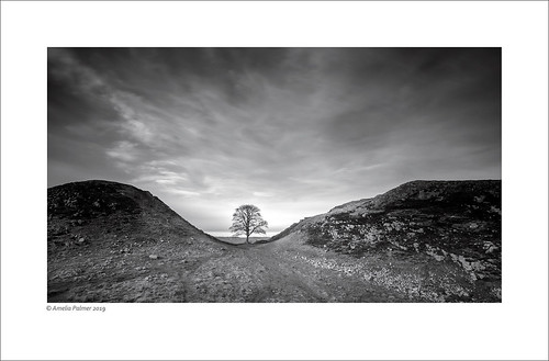 Sycamore Gap (Explored!) | by Mike Palmer Fauxtography
