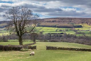 Farndale | by www.andrewswalks.co.uk