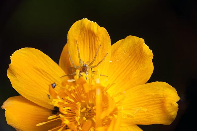 My Yellow Trap - _TNY_0727