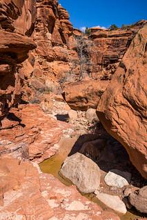Canyon Scene | by IntrepidXJ