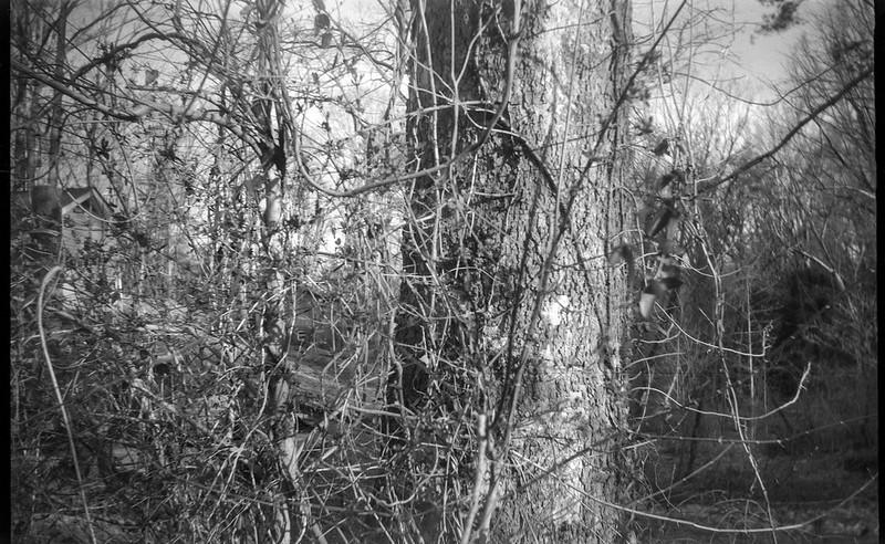 tangled vines and branches, tree trunk, Community Park at Craggy Park, Asheville, NC, Eastman Kodak No. 2 Bulls Eye Model D, Arista.Edu 200, FPP-110 developer, 2.19.19