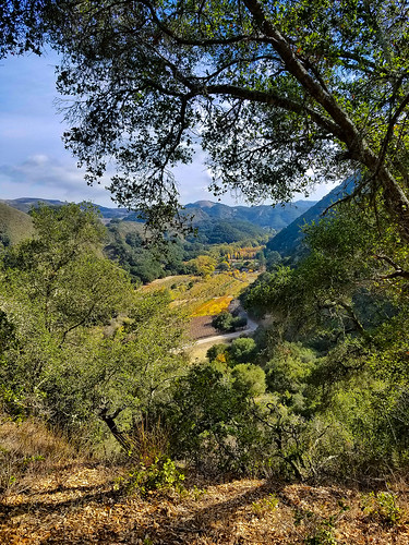 landscape seecanyon sanluisobispo trees forest fall gettyimages getty mimiditchie mimiditchiephotography canyon blackwalnutroad