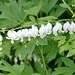 HGW in Virginia Flowers Photos
