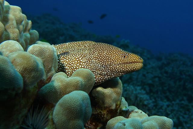 reef spots