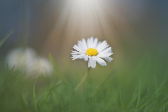 Finding Light...