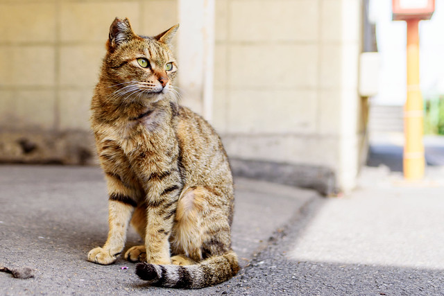 Stray cat lives at Ogimachi Station : 扇町駅で暮らす猫