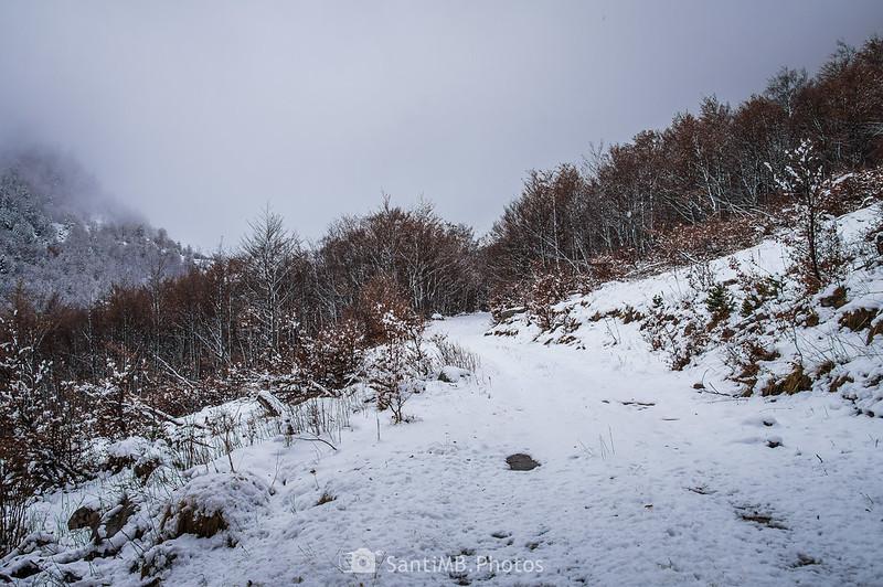 Un claro provocado por una avalancha de nieve