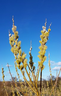 Blue Sky and Green Buds .. | by Gilli8888