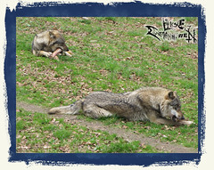 And_Out_Come_The_Wolfes-10-12-39 AM-