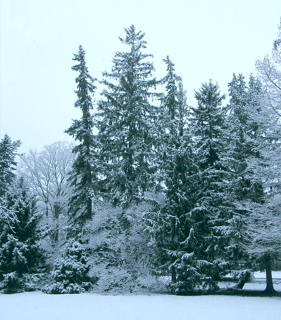 Cold Winter Trees