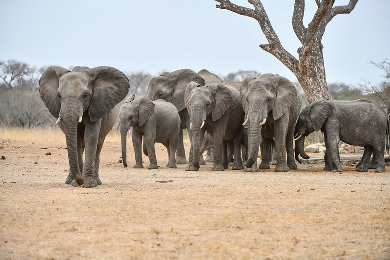 2253 Elephant