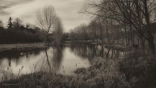 River Glyme, Blenheim   by toniertl