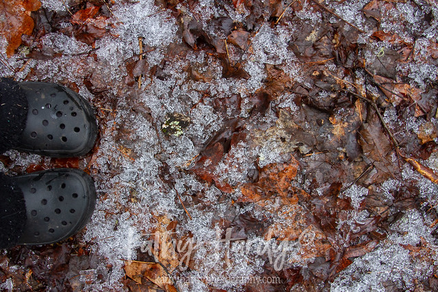 Ice all over the forest floor