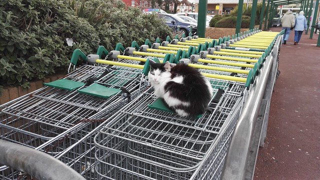 not much purr chase