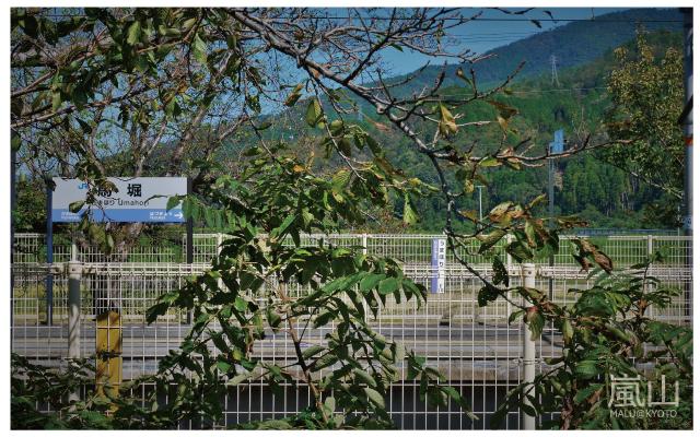 嵐山半日遊-2