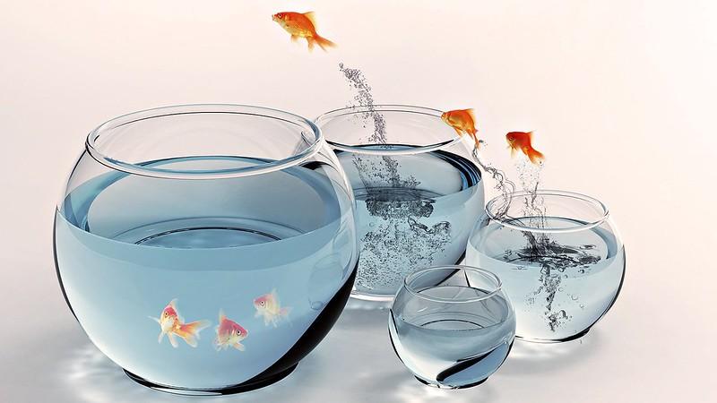 Обои рыба, аквариум, золотой, брызги, прыжок картинки на рабочий стол, фото скачать бесплатно